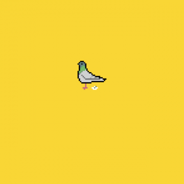 iphone5pigeon